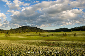 Wind Cave National Park, South Dakota, rolling hills, prairie