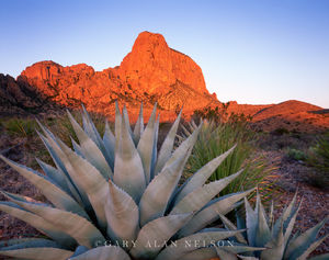 Agave and Chisos Mountains