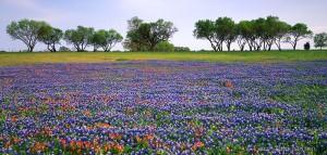 LBJ State Historical Park, Texas, texas bluebonnets, paintbrush