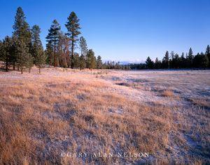 Bryce Canyon National Park, Utah, prairie grass, pines