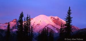 Mount Rainier National Park, Washington, dawn