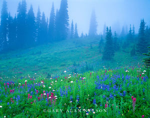 Mount Rainier National Park, Washington, wildflowers, fog