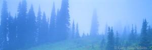 trees, fog, mount rainier national park, washington
