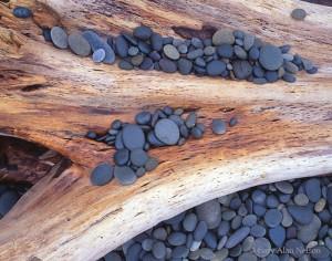stones, timber, olympic national park, washington, olympic coastal strip