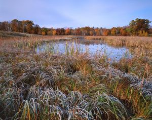 Loon Lake State Wildlife Area, Wisconsin,frost, marsh