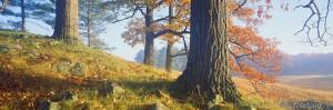 oak trees, fog, wisconsin