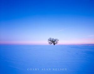 Sawyer County, Wisconsin,oak tree