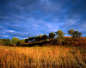 Trempealeau National Wildlife Refuge, Wisconsin, prairie grasses