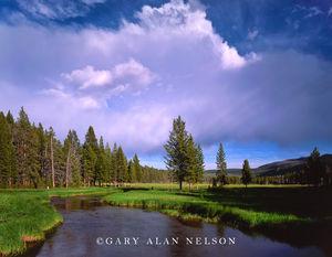 Yellowstone National Park, Wyoming, gibbon river
