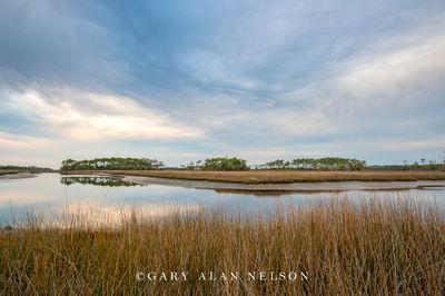 Gloom over the Marsh