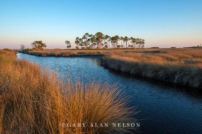 Grasses and Marsh