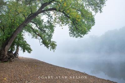 Fog over the Mississippi River