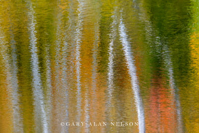Autumn reflections on pond
