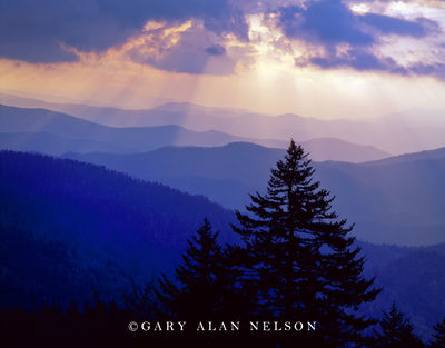 Great Smoky Mountains National Park, Tennessee, vignette