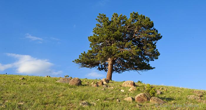 rocky mountain, national park, colorado, photo