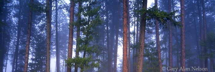 national forest, idaho, fog, photo