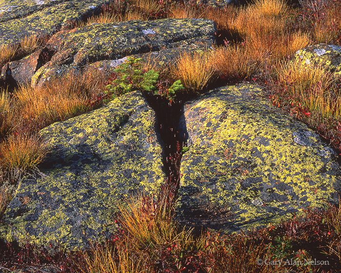 lichen, rocks, photo