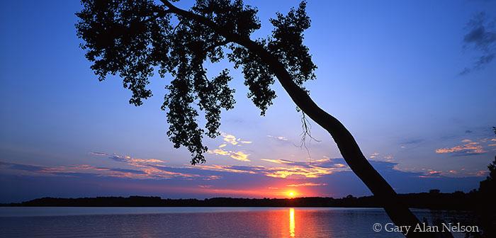 Sakatah Lake, Minnesota, dawn, leaning tree, photo