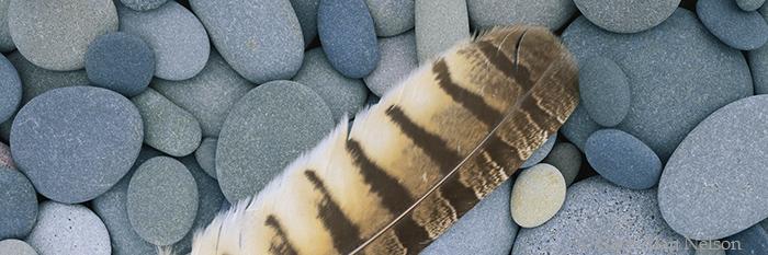minnesota, feather, stones, lake superior, photo