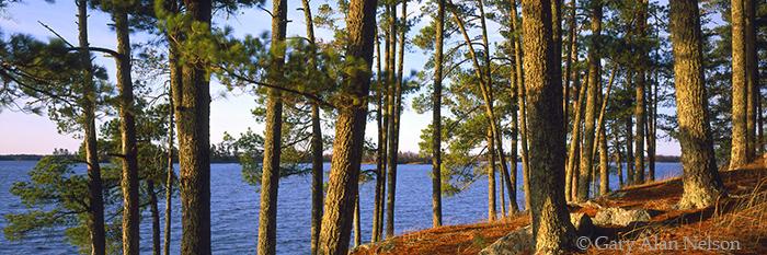 kabetogema lake, minnesota, voyageurs national park, white pines, photo