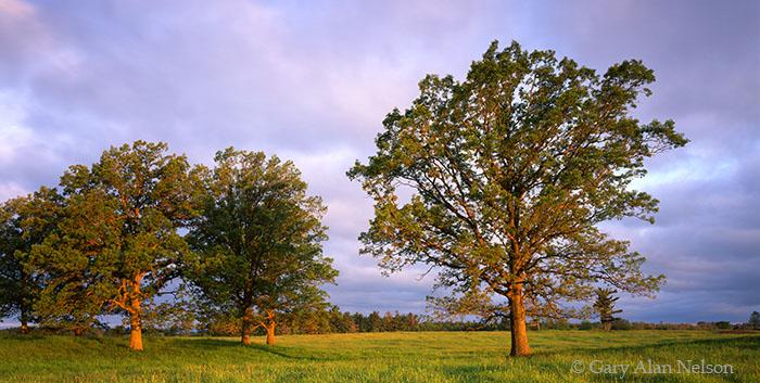 Banning State Park, Minnesota, oak savannah, photo