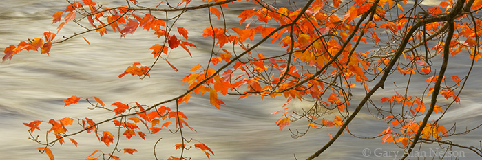 leaves, autumn, state park, photo