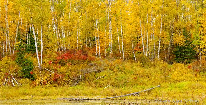 minnesota, national forest, chippewa national forest, autumn, photo