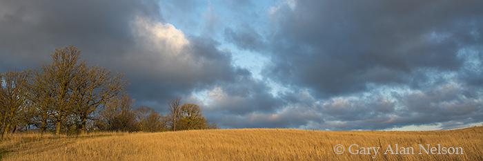 minnesota, prairie, clouds, oaks, photo