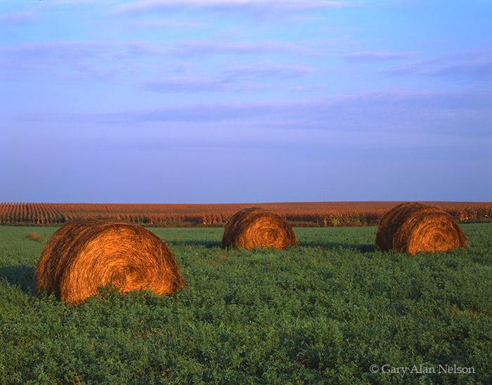 minnesota, straw, douglas county, photo