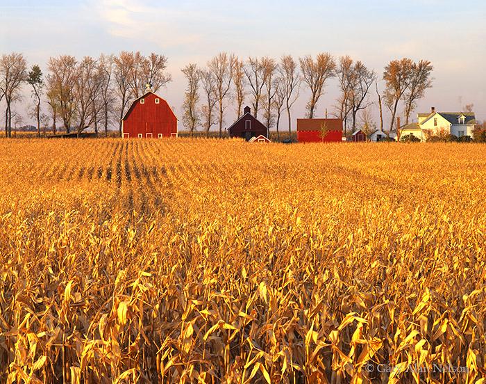 MN-92-76-FM Fields of corn and farm in southern Minnesota, Sleepy Eye, Minnesota.