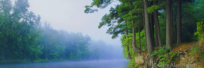MN-93-77P-SP White Pines and fog towering over the St. Croix National Scenic River, Minnesota, Wisconsin