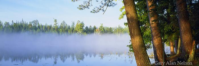 minnesota, coon lake, state park, fog, white pines, morning, fog, photo