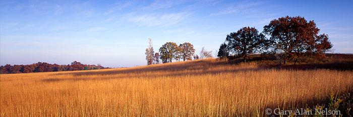 prairie, grasses, minnesota, photo