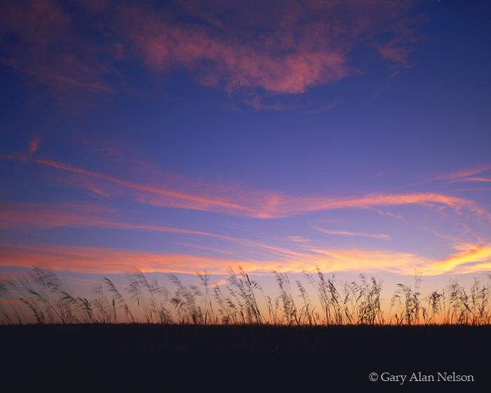 minnesota, grass, dusk, photo