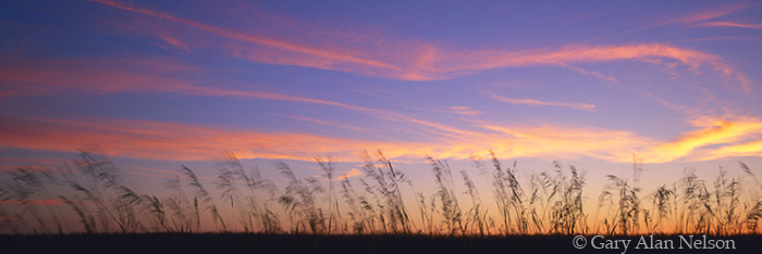 grasses, minnesota, dusk, photo