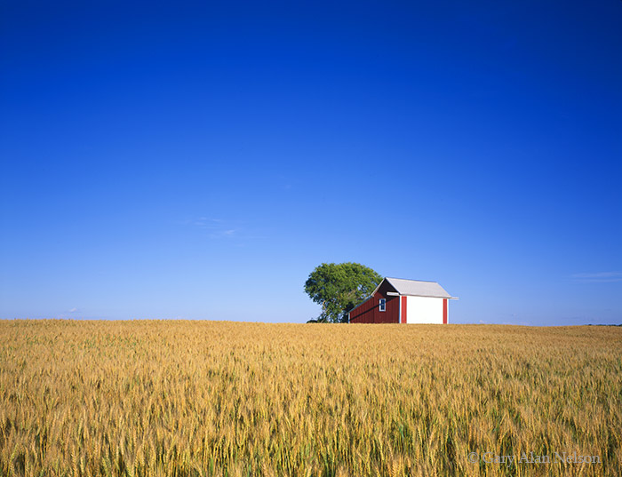 minnesota, barn, wheat, photo