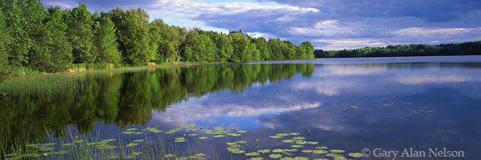 echo lake, minnesota, lily pads, minnesota, state park, photo