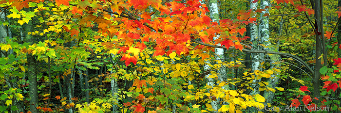 minnesota, hardwood forest, state park, autumn, photo