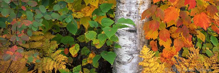 minnesota, superior national forest, autumn, photo