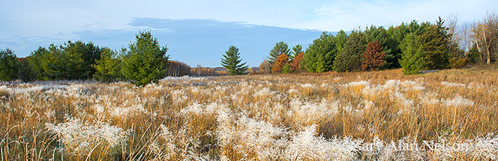 Hoar frost covering prairie grasses, Carlos Avery Wildlife Management Area, Minnesota, photo