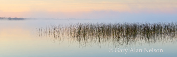 bulrushes, minnesota,, lake, photo