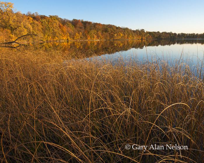 bulrushes, round lake, minnesota, lake, photo