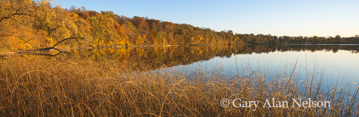 round lake, minnesota, bulrushes, autumn, photo