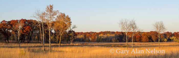 oak, birch,minnesota, prairie, cedar creek, photo
