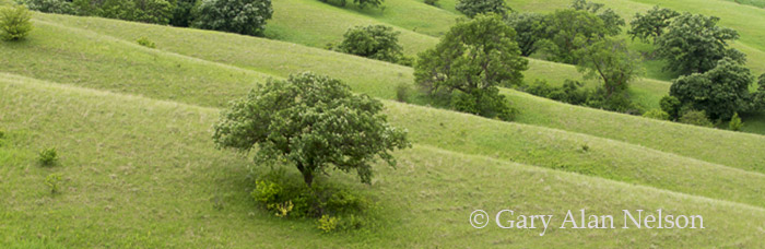 the nature conservancy, minnesota, rolling prairie, prairie, photo