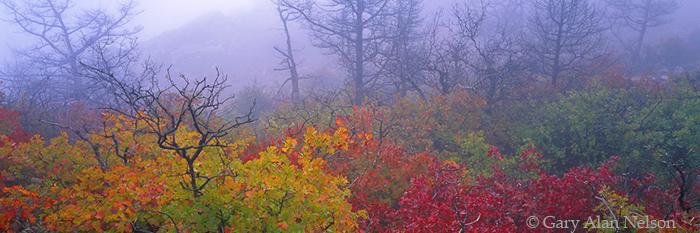 asters, oak leaves, wichita mountains, photo