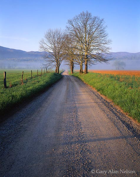 tennessee, national park, lane, great smoky mountains, photo
