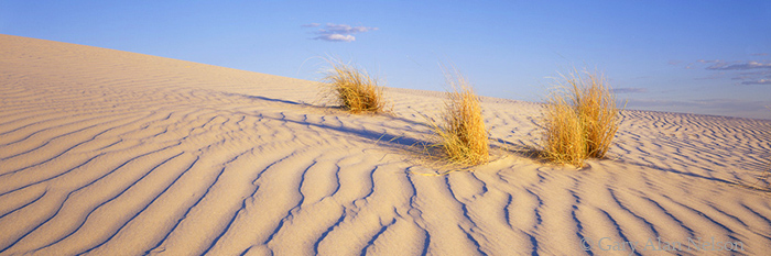 dunes, guadalupe national park, texas, photo