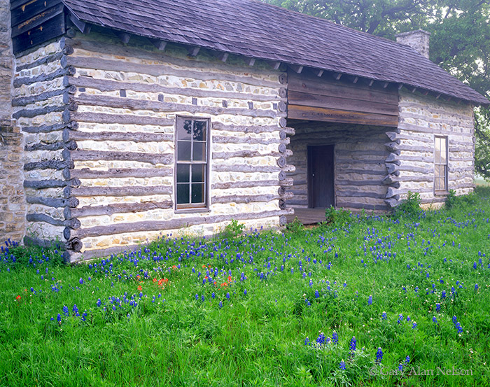 texas, bluebonnets, log cabin, photo