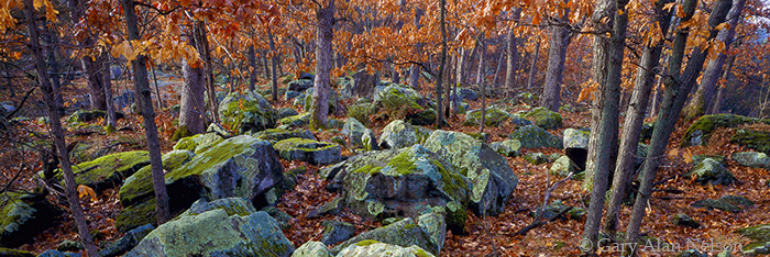 oaks, boulders, wisconsin, photo